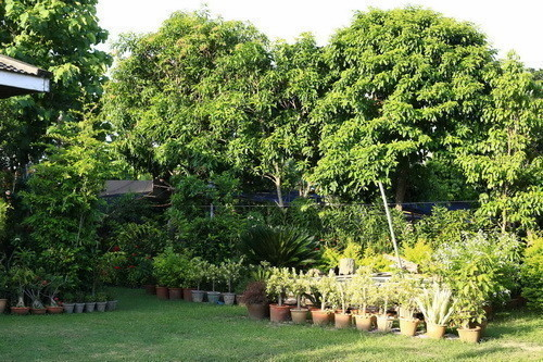 For Sale 3 Beds 一戸建て in Mueang Phayao, Phayao, Thailand | Ref. TH-QVNLHJLB
