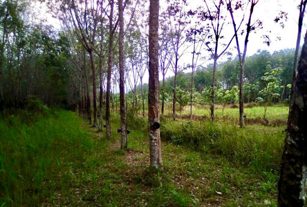 For Sale Land 9-0-52 rai in Rattaphum, Songkhla, Thailand