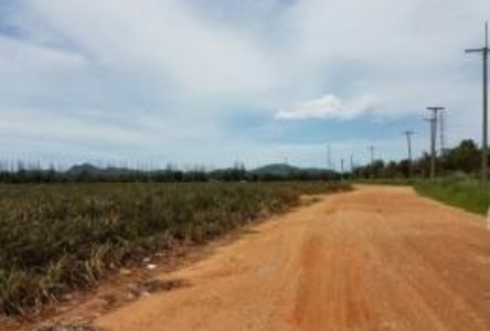For Sale Land 318 rai in Hua Hin, Prachuap Khiri Khan, Thailand