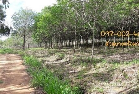For Sale Land 160 rai in Mueang Chaiyaphum, Chaiyaphum, Thailand