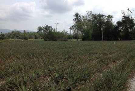 ขาย หรือ เช่า ที่ดิน 111 ตร.ว. ศรีราชา ชลบุรี