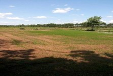 For Sale Land 28 rai in Chon Daen, Phetchabun, Thailand