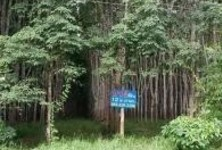 For Sale Land 12 rai in Ban Na San, Surat Thani, Thailand