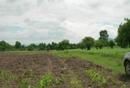 For Sale Land 26 rai in Chai Badan, Lopburi, Thailand