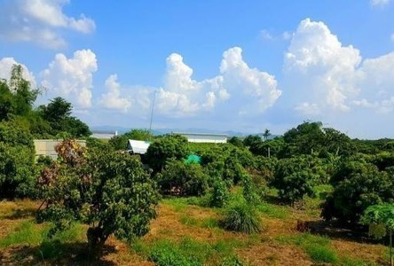 For Sale Land 694 sqwa in Mueang Lamphun, Lamphun, Thailand