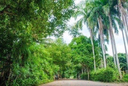 For Sale Land 214 sqwa in Hang Dong, Chiang Mai, Thailand
