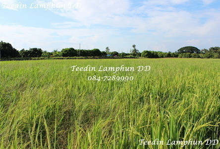 For Sale Land 2 rai in Mueang Lamphun, Lamphun, Thailand