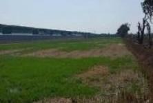 ขาย ที่ดิน 157 ไร่ หนองเสือ ปทุมธานี