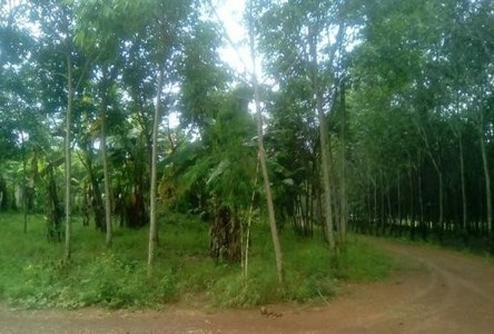 For Sale Land 35 rai in Tha Mai, Chanthaburi, Thailand