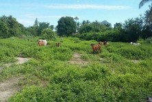For Sale Land 900 sqwa in Cha Am, Phetchaburi, Thailand