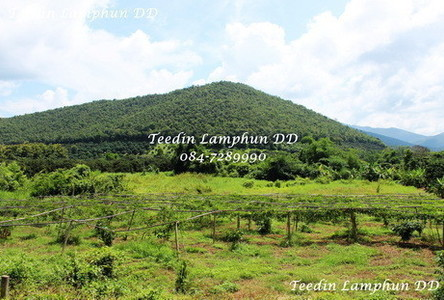 For Sale Land 2 rai in Mae Tha, Lamphun, Thailand