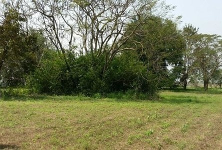 For Sale Land 294 sqwa in Bang Lamung, Chonburi, Thailand