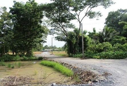 For Sale Land 200 sqwa in Doi Saket, Chiang Mai, Thailand