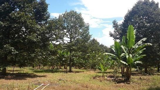 Продажа: Земельный участок 26 рай в районе Khlung, Chanthaburi, Таиланд | Ref. TH-DATRROJE