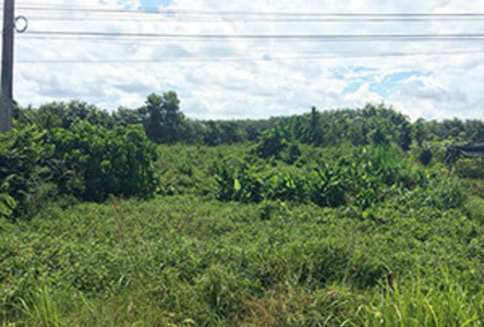 For Sale Land 4.37 rai in Cha-uat, Nakhon Si Thammarat, Thailand
