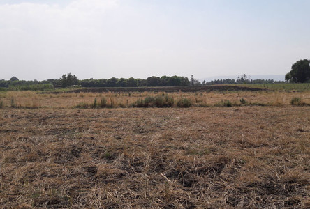 For Sale Land 26 rai in Khok Samrong, Lopburi, Thailand