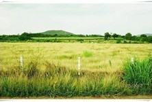 For Sale Land 20 rai in Pak Chong, Nakhon Ratchasima, Thailand