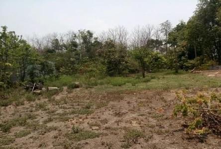For Sale Land 350 sqwa in Doi Saket, Chiang Mai, Thailand