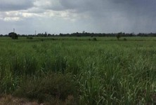 For Sale Land 133 rai in Song Phi Nong, Suphan Buri, Thailand