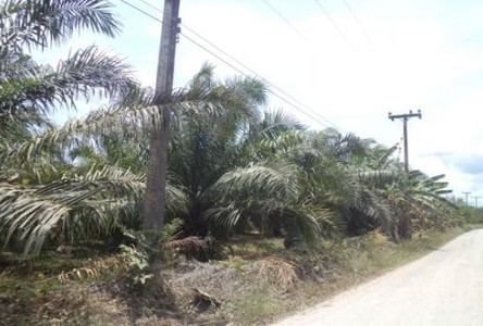 For Sale Land 39 rai in Thung Tako, Chumphon, Thailand