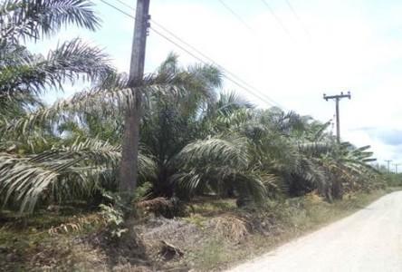 Продажа: Земельный участок 39 рай в районе Thung Tako, Chumphon, Таиланд