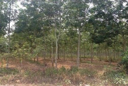 For Sale Land 17 rai in Sadao, Songkhla, Thailand
