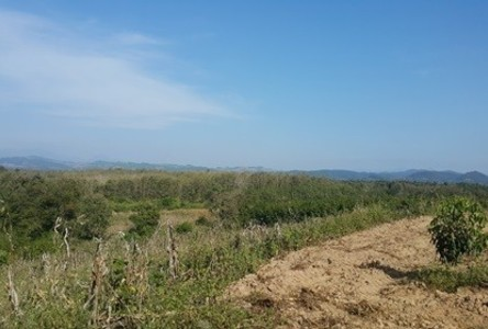 For Sale Land 6 rai in Phu Phiang, Nan, Thailand