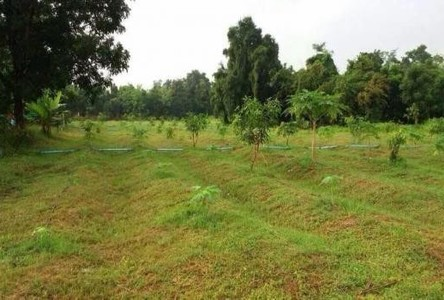 For Sale Land 55 rai in Don Chedi, Suphan Buri, Thailand
