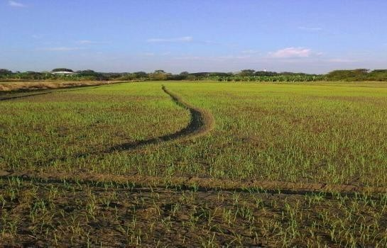 For Sale Land 6 rai in Maha Rat, Phra Nakhon Si Ayutthaya, Thailand | Ref. TH-QNVXASMK