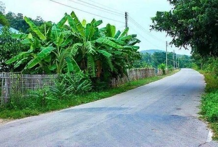For Sale Land 4 rai in Mueang Lamphun, Lamphun, Thailand