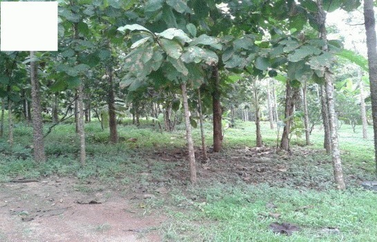For Sale Land 69 rai in Long, Phrae, Thailand | Ref. TH-RRIUDSOL