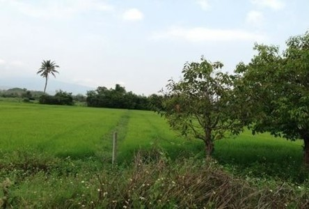 For Sale Land 724 sqwa in Hang Dong, Chiang Mai, Thailand