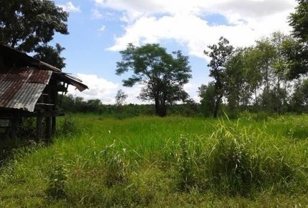 For Sale Land 10 rai in Phon Charoen, Bueng Kan, Thailand