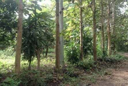 For Sale Land 280 sqwa in Muang Nan, Nan, Thailand