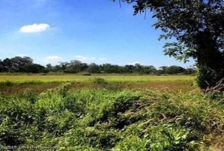 ขาย ที่ดิน 700 ตร.ว. หนองเสือ ปทุมธานี