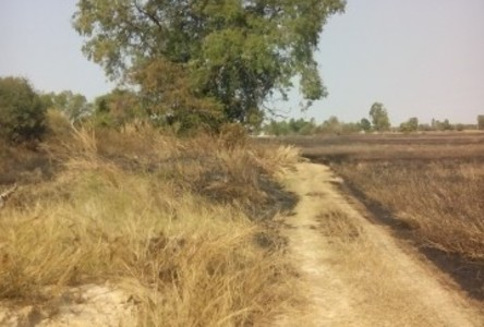 For Sale Land 5 rai in Yang Talat, Kalasin, Thailand