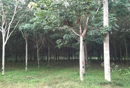 For Sale Land 21 rai in Tamot, Phatthalung, Thailand