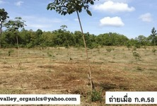 For Sale Land 50 rai in Doi Saket, Chiang Mai, Thailand