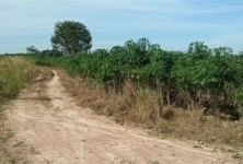 For Sale Land 386 sqwa in Nikhom Phatthana, Rayong, Thailand