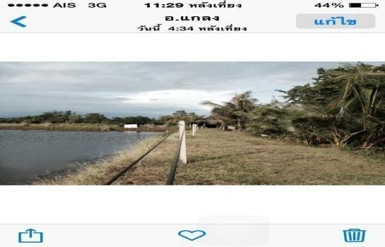 For Sale Land 12.5 rai in Klaeng, Rayong, Thailand   Ref. TH-OPIKVRLV