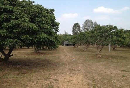 For Sale Land 540 sqwa in Mueang Lamphun, Lamphun, Thailand