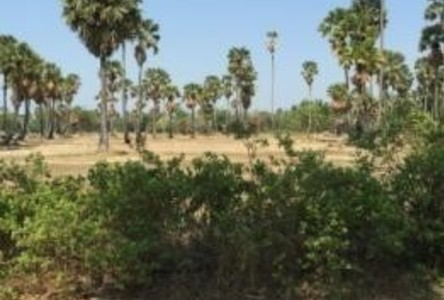 ขาย ที่ดิน 100 ตร.ว. เมืองเพชรบุรี เพชรบุรี