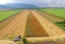 For Sale Land 47 rai in Kaeng Khoi, Saraburi, Thailand
