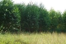 Продажа: Земельный участок 27 рай в районе Si Racha, Chonburi, Таиланд