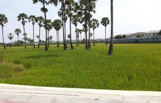 For Sale Land 15 rai in Pak Kret, Nonthaburi, Thailand | Ref. TH-ZZYEYZMY