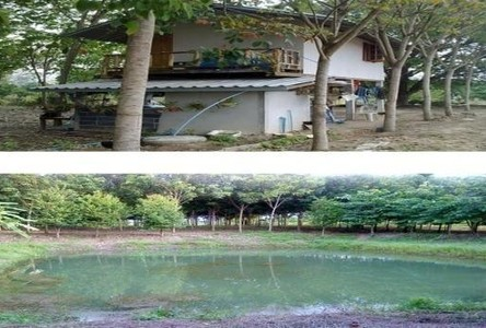For Sale Land 23.2 rai in Wang Thong, Phitsanulok, Thailand