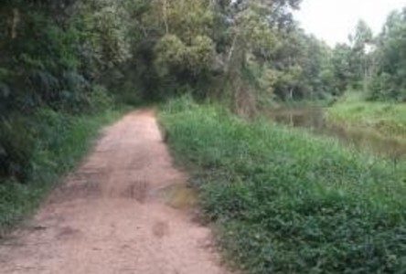For Sale Land 6 rai in Klaeng, Rayong, Thailand