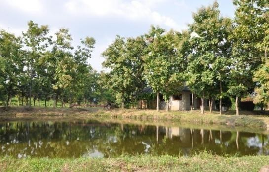 For Sale Warehouse 15,664 sqm in San Pa Tong, Chiang Mai, Thailand | Ref. TH-ZFTDAYYZ