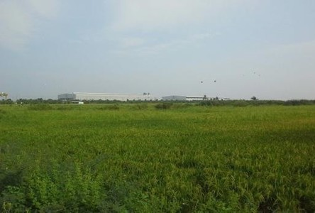 For Sale Warehouse 103 rai in Lam Luk Ka, Pathum Thani, Thailand