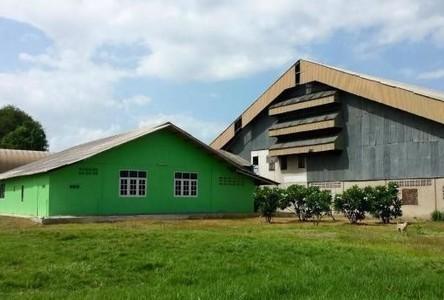 Продажа или аренда: Склад 950 кв.ва. в районе Hankha, Chainat, Таиланд